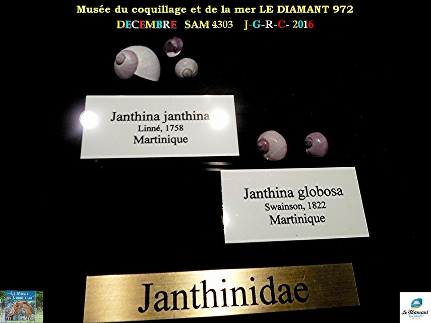 Le monde des coquillages de mer   5/5  25/29    LE DIAMANT MARTINIQUE       D    30/10/2018