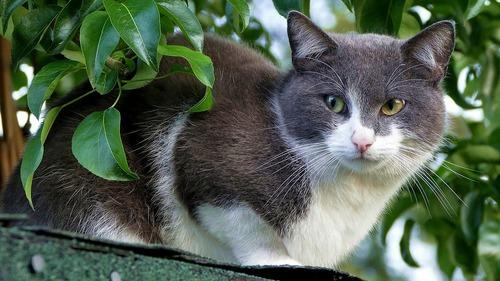 Solutions au jardin pour limiter la prédation des chats
