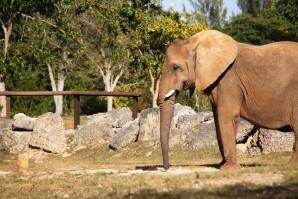 zoo 2613
