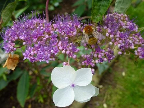 Août dans mon jardin