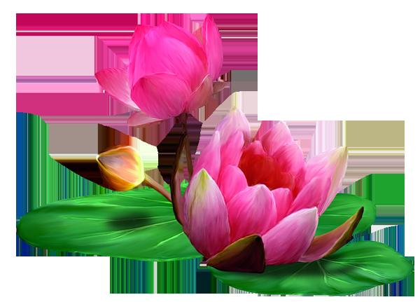 Картинки лотос цветок