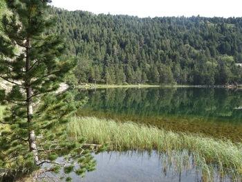 Calme plat sur le lac de Balcère