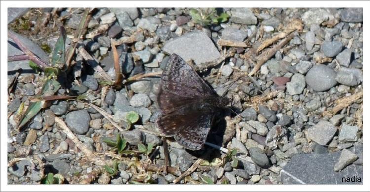 Papillon à identifier.