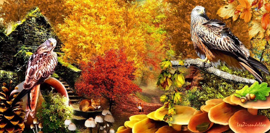 Grands fonds automne/ Les habitants du bois