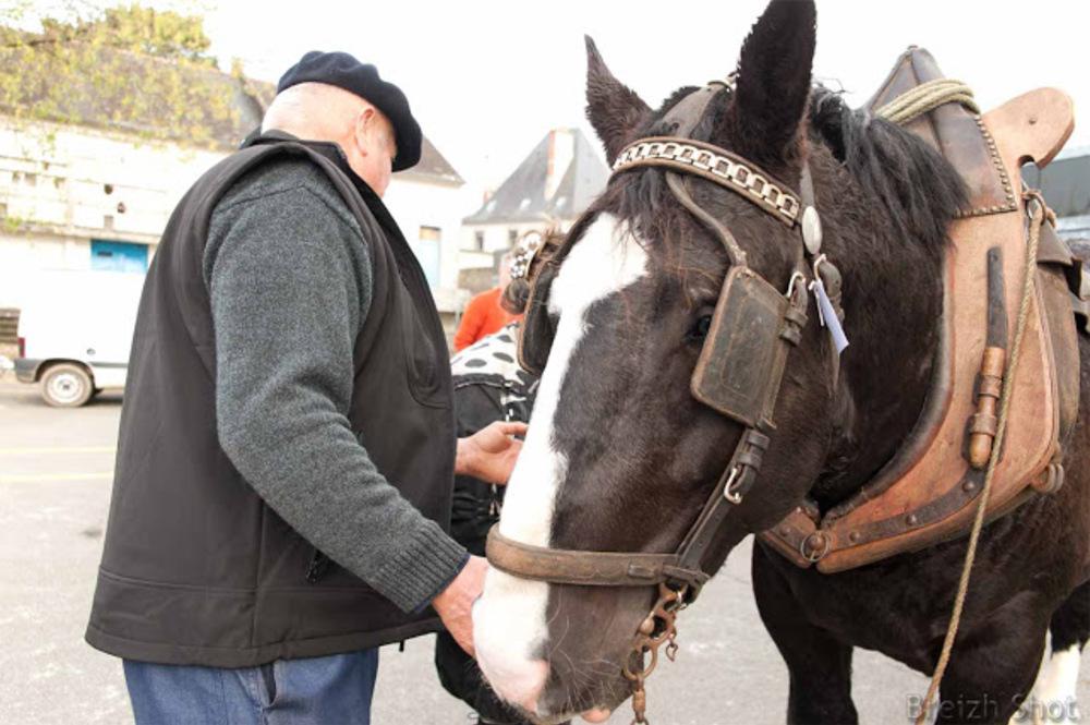Le cheval breton concours de maniabilité