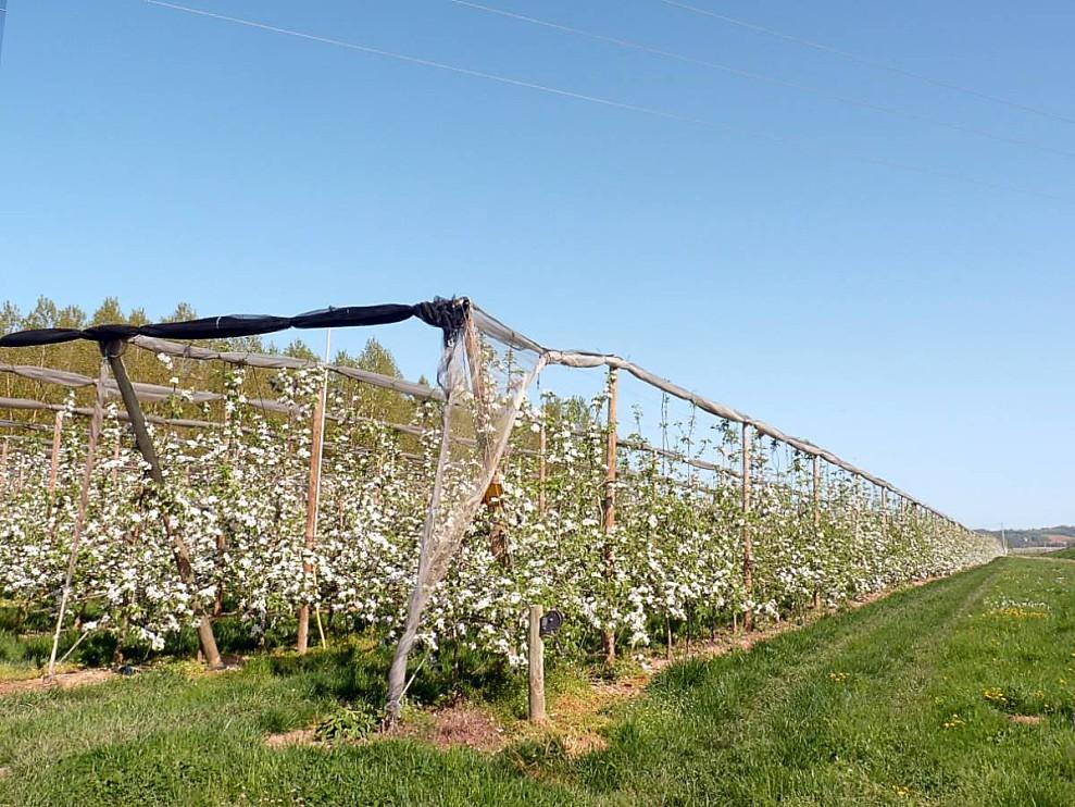 Fruitiers-2.jpg