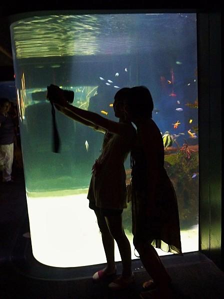 Jour 28 Vancouver aquarium ombres 2