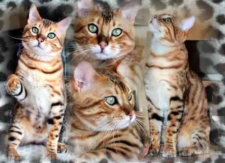 Omaley8295753-bw-leopard-peau-arriere-plan-ou-la-texture-grande-resolution