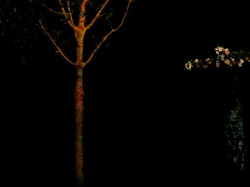 l'arbre où s'endort