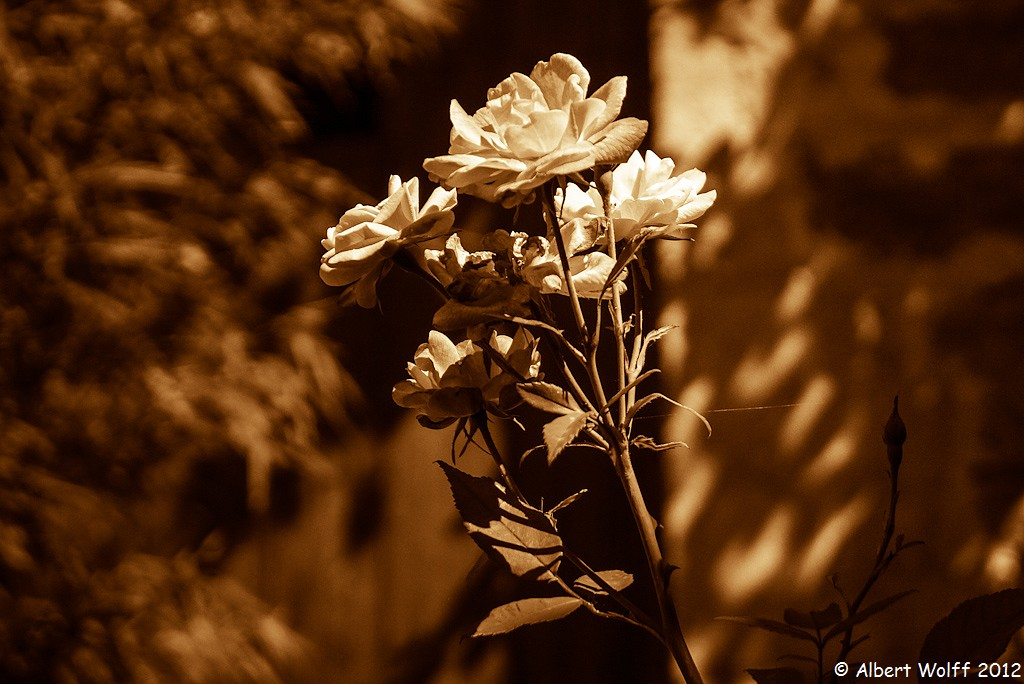 Les fleurs de mes vacances 2012 (part 2)