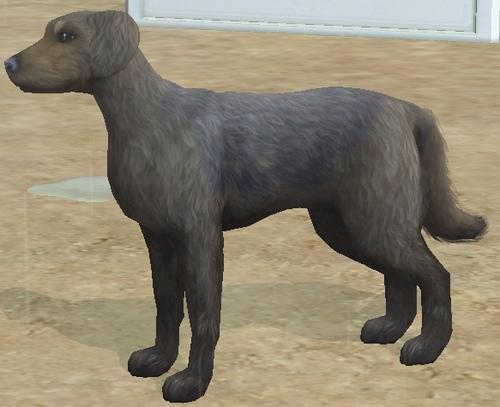 (Larans Lignée Canine)