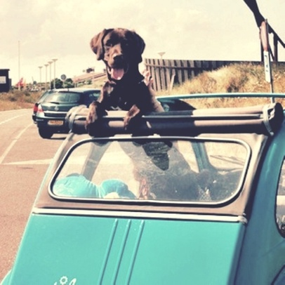 04 - Dogs and car, colors
