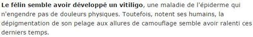 SUITE DES AUTRES CHATS