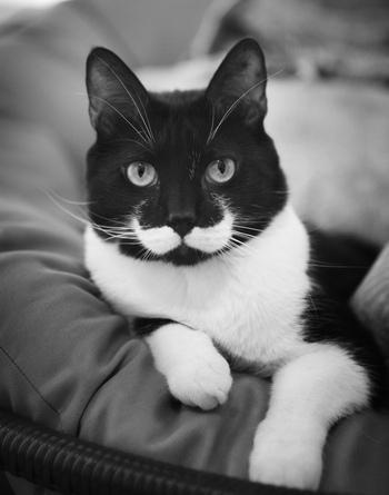 Des chats à moustaches