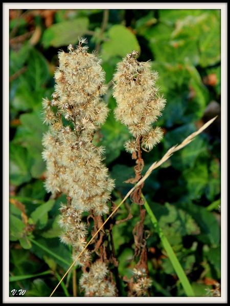 Pêle-mêle de fleurs