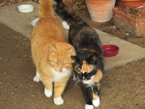 Mia et Miel ont besoin de Vous - ne sont ils pas magnifiques