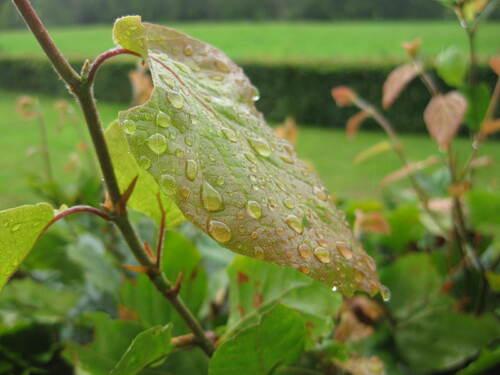 Défi n° 307 : le 15 septembre 2021 : il a plu sur les végétaux