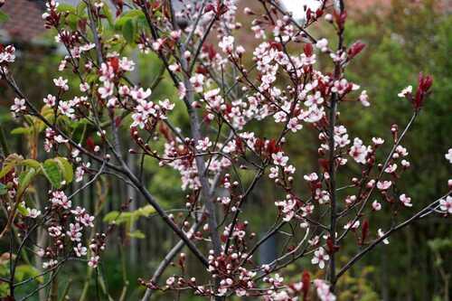 Floralies de printemps
