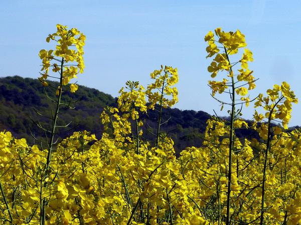 Symphonie en bleu et jaune avec Générations 13
