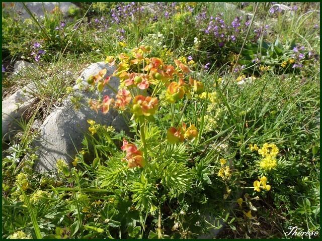 Flore du Grand Colombier (12)
