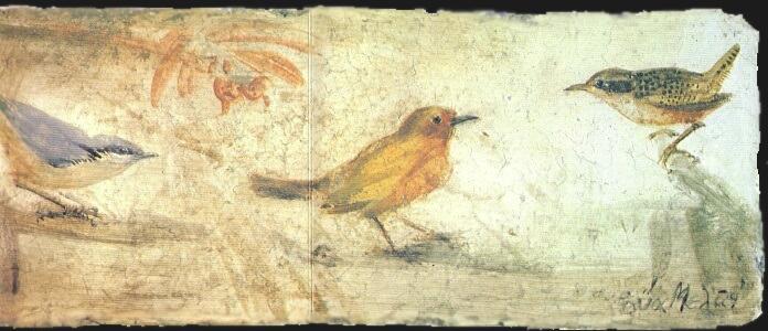 Pourquoi mon oiseau ne chantes-tu pas ? * Γιατί πουλί δεν κελαηδείς