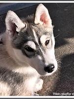 Onaya (3,5 mois)