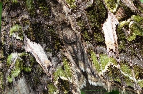 Le camouflage des papillons.