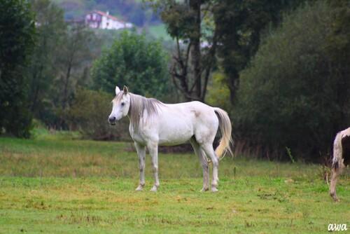 Allons chercher EVITA, dans les Pyrénées...