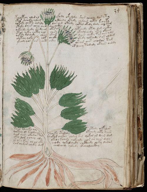 Le livre le plus mystérieux au monde : le manuscrit Voynich