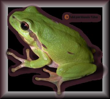 Tube grenouilles / Crapauds 2942