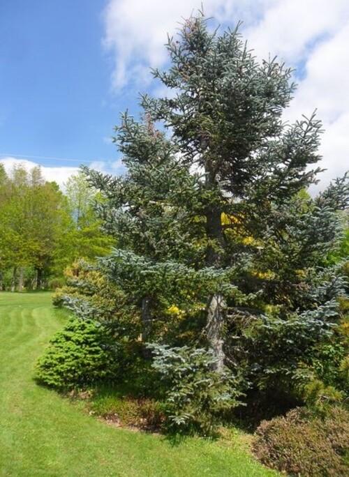 Vernioz. Le jardin du bois marquis (2).