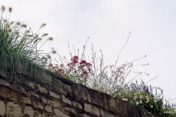 T00 - plantes et haut de mur
