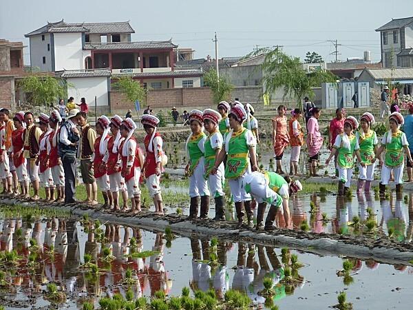 fête du repiquage du riz près de Dali