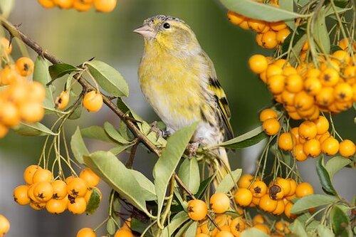 Prenons le temps d'écouter les oiseaux en ce mois de mars