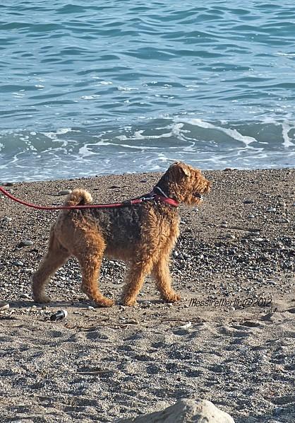 La-plage-MessireMerlin.jpg