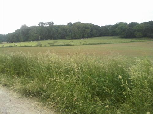 Le trail de la gaufre