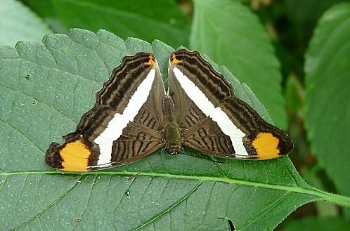 Serre-aux-papillons--Goulaine--8-7-10-P369.JPG