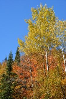 Canada Quebec - Aux couleurs de l'Eté indien - Automne 2014