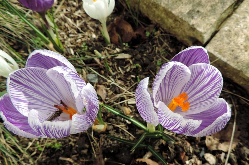 Quelques fleurs en février...