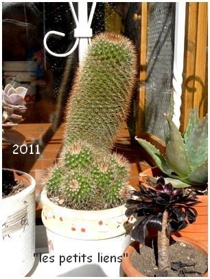 cactees-2011-7b.jpg