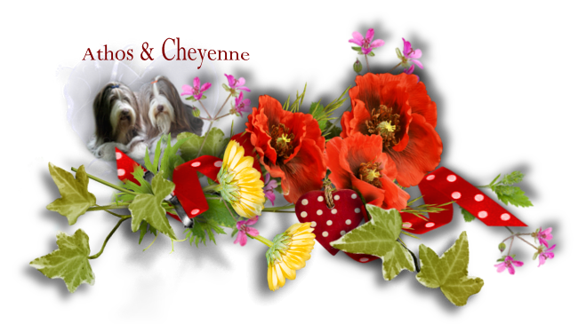 ♥ Athos & Cheyenne ♥ - photos 3ème trimestre 2014