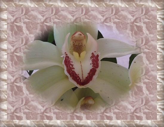 orchidée fete des mères 2012