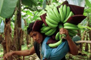 bananero.jpg