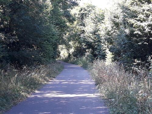 Notre petite voie ombragée