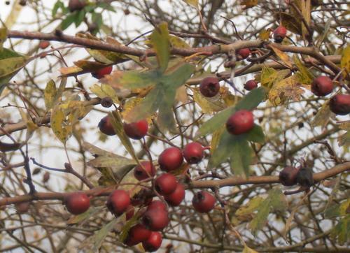 Faune et flore dans l'Eure