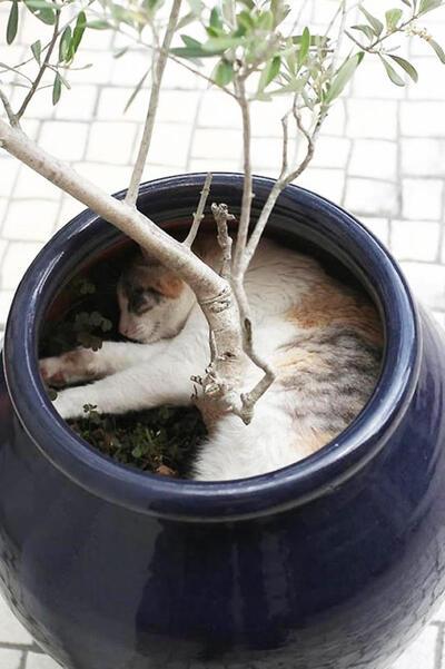 Chat = fleur