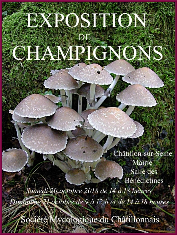 Samedi 20 octobre et dimanche 21 octobre, la Société Mycologique du Châtillonnais présentera une belle exposition salle des Bénédictines
