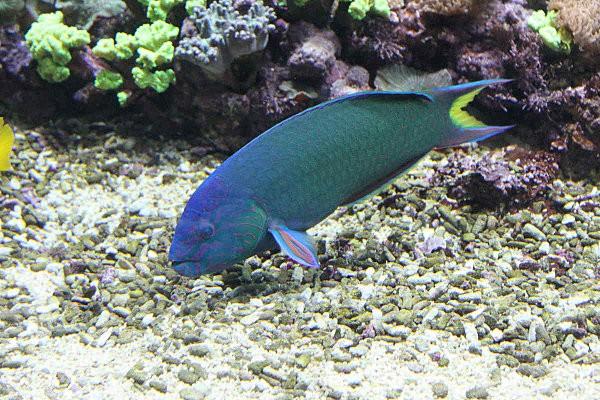 aquarium La Rochelle(23)