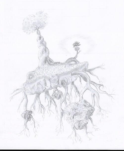 Un arbre pas comme les autres