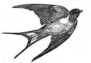 1afree--clip-art-bird-swallow-gfairy004.jpg